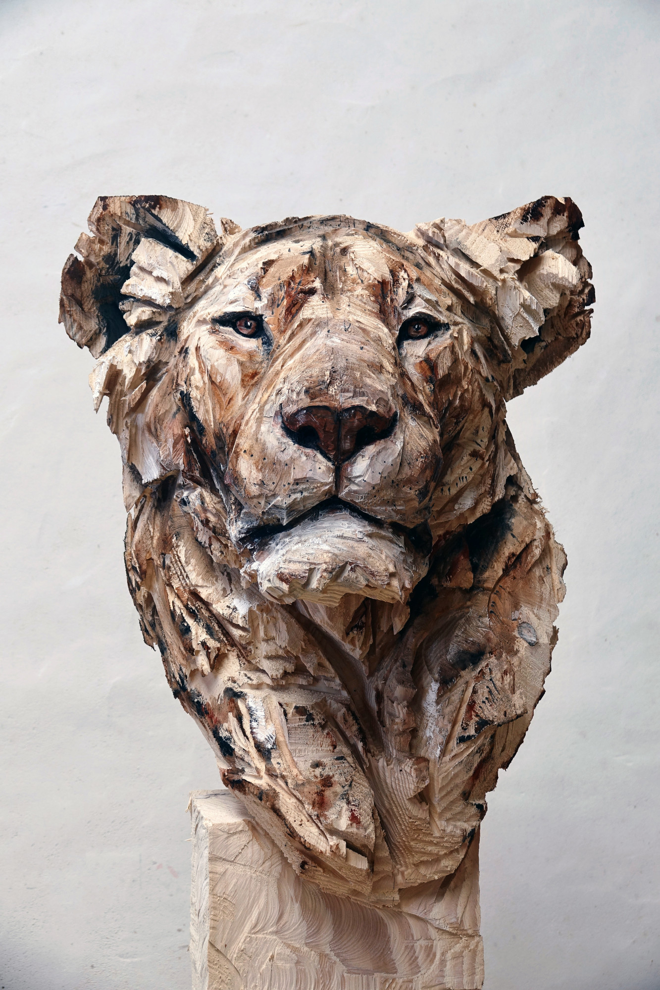 Untitled - Lioness (1)